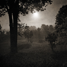 Moonscape Trees by Pete Kelly