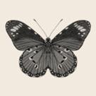 Pixel Butterfly by Joni Whyte