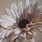 White Gerbera by Carolina Alotus