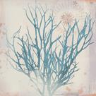 Oceanus Botanica by Ken Hurd