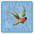 Exotic Birds II by Gwen Aspall
