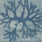 Alga Alligata - Aral by The Drammis Collection