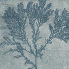 Alga Alligata - Sargasso by The Drammis Collection