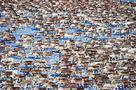 The Herd by Peter Lilja