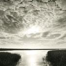 Through The Marsh by Michael Kahn