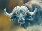 Warrior - African Cape Buffalo by Kim Thompson