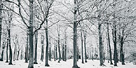 Glade In Winter by Joseph Eta
