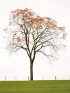 Tree Seasons III by Bill Coleman