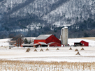 Winter Farm by Bill Coleman