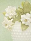 Candy Flowers III by Shana Rae