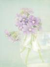 Candy Flowers V by Shana Rae
