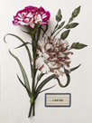 Floral Decoupage - Dianthus by Camille Soulayrol