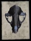 Cranium by Chris Dunker
