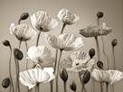 Poppy Elevation by Assaf Frank