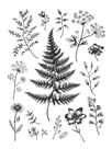 Herbarium by Lucy Francis
