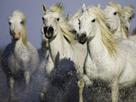 Running Wild by Wild Wonders of Europe