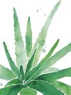 Arid - Aloe by Kristine Hegre
