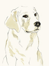 Puppy Profile by Kristine Hegre