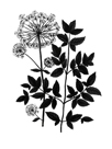 Botanica Angelica - Noir by The Vintage Collection