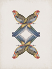 Platycercus Adelaidae - Reflection by The Drammis Collection