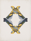 Platycercus Flaveolus - Reflection by The Drammis Collection