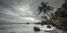 Tropical Retreat by Alan Copson