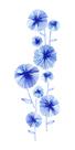 Flowering Aster by Ulla Lapiolahti