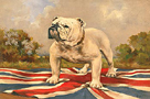 The British Bulldog by 19th Century English School