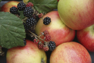 Garden Fruits by Bill Philip