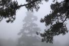 Pine Grove by Bill Philip