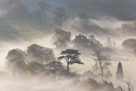 Misty Morning by Peter Adams