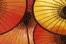 Oriental Umbrellas by Peter Adams