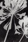 Allium Shade by Ella Lancaster