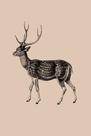 Woodland - Deer by Maria Mendez