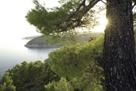 Hillside Glimpse by Wild Wonders of Europe