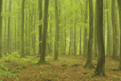 Forest Floor by Staffan Widstrand