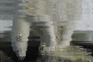 Polar Bear Reflection by Staffan Widstrand