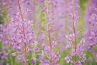 Meadow Wonder by Staffan Widstrand