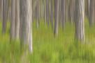 Forest Fresh by Staffan Widstrand