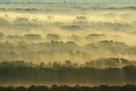 Tree Top Patterns by Staffan Widstrand