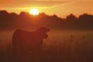 Sundown by Staffan Widstrand