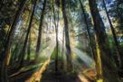Enchanted Sunlight by Bobby Joshi