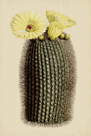 Echinocactus by The Drammis Collection