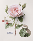 Floral Decoupage II by Camille Soulayrol