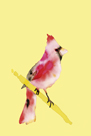 Paintbox Birds - Joy by Kristine Hegre