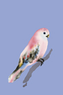 Paintbox Birds - Love by Kristine Hegre