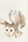 Forest Odyssey - Owl by Kristine Hegre