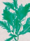 Emerald Sea III by Henry Bradbury