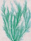Emerald Sea IV by Henry Bradbury