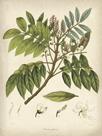 Vintage East Indian Plants II by Maria Mendez